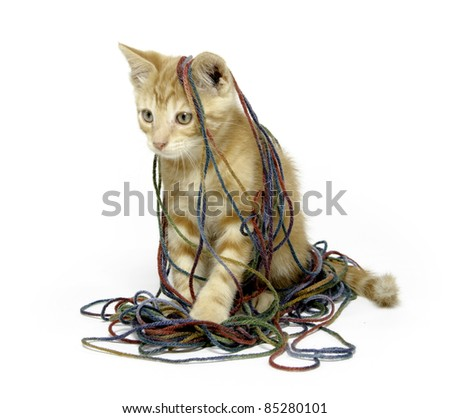 Cute yellow tabby cat with colorful yarn on white background - stock photo