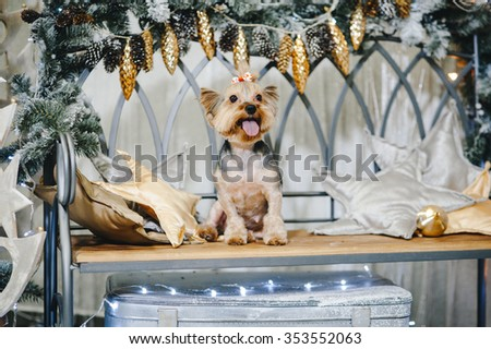 Cute Yorkshire Terrier in front of Christmas decor - stock photo
