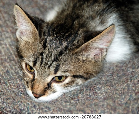 cute young cat close-up - stock photo