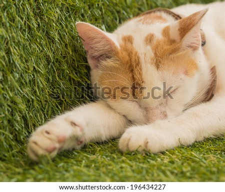 Cute young cat sleeping on green turf - stock photo