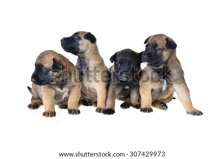 Cute young puppy on white  background - stock photo