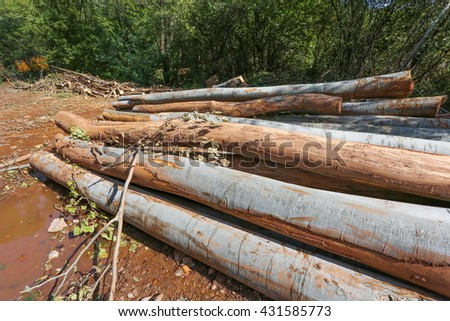 Cutted logs - stock photo