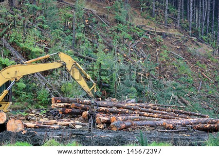 cutting of pine trees for timber on a hillside - stock photo