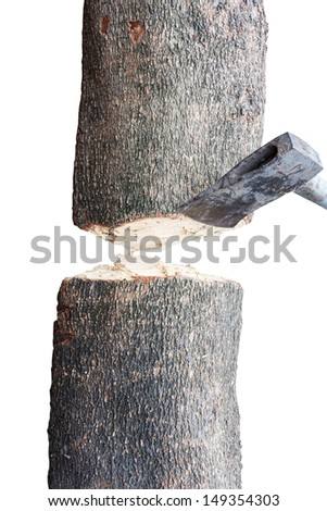 cutting tree use by axe on white background with clipping path - stock photo