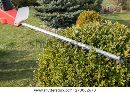 Cutting wintergreen plant by electric telescopic fence scissors. All potential trademarks are removed. - stock photo