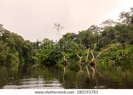 Cuyabeno river, Cuyabeno reserve, south america, Ecuador - stock photo