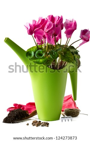 Cyclamen and tools for transplanting plants isolated on white background - stock photo
