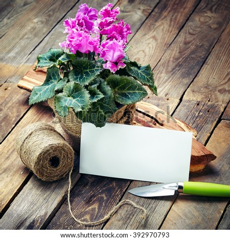 cyclamen in the pot and garden tools on an old wooden table - stock photo