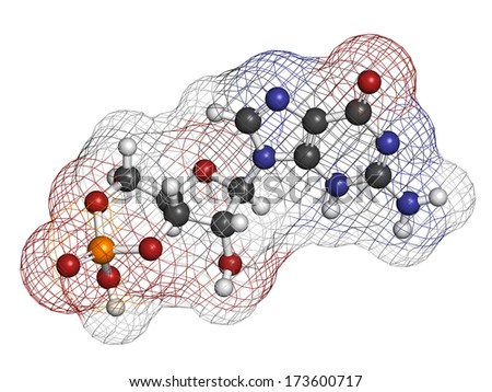 Guanosine 3,5-Cyclic Monophosphate (cGMP) antibody