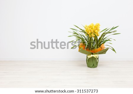 Cymbidium it is placed into a white room - stock photo