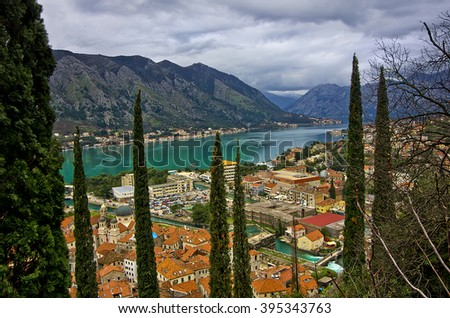 Cypress in the old town of Kotor,  Bay of Kotor, Montenegro - stock photo
