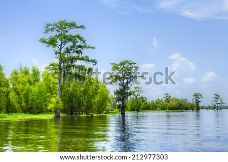 Cypress reflection in Atchafalaya River. - stock photo