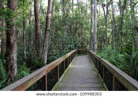 Cypress Swamp in the Everglades, Loxahatchee National Wildlife Refuge - stock photo