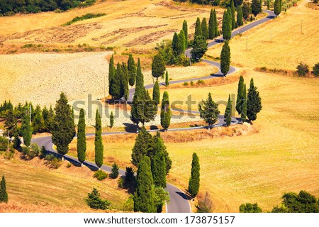 Cypress tree scenic road in Monticchiello near Siena, Tuscany, Italy, Europe. - stock photo