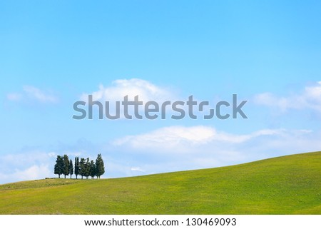 Cypress trees group and green field, rural landscape in Crete Senesi, Siena, Tuscany. Italy - stock photo
