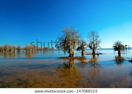 Cypress trees on a winter day at lake with hanging moss - stock photo