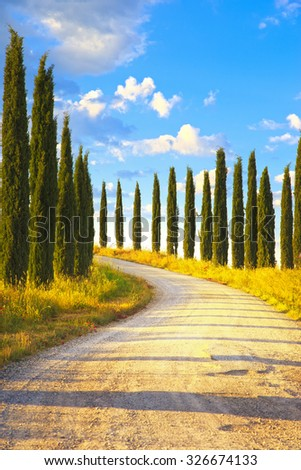 Cypress Trees rows and a white road rural landscape. Siena, Tuscany, Italy, Europe. - stock photo