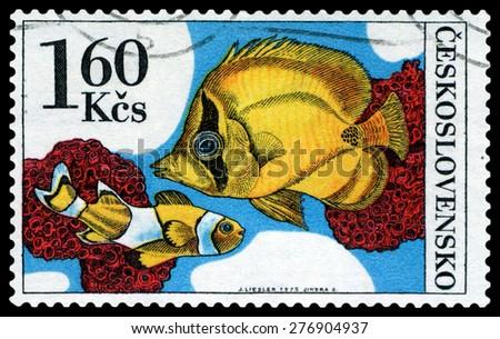 CZECHOSLOVAKIA - CIRCA 1975: a stamp printed by Czechoslovakia  show Aquarium  Fish Amphiprion percula and chaetodon, circa 1975 - stock photo
