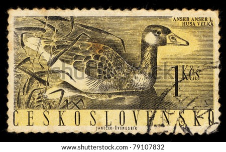 CZECHOSLOVAKIA - CIRCA 1960: A Stamp printed in Czechoslovakia shows image of Anser anser L (Greylag Geese), circa 1960 - stock photo