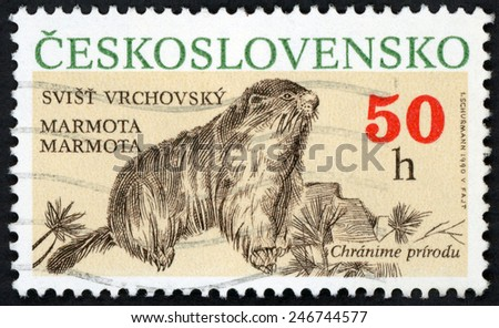 CZECHOSLOVAKIA - CIRCA 1990: stamp printed in Ceskoslovensko (Czech) shows illustration of marmota marmot (svist vrchovsky); protected animals (chranime prirodu); Scott 2804 A1012 50h; circa 1990 - stock photo