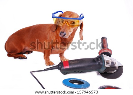Dachshund dog with angle grinder - stock photo