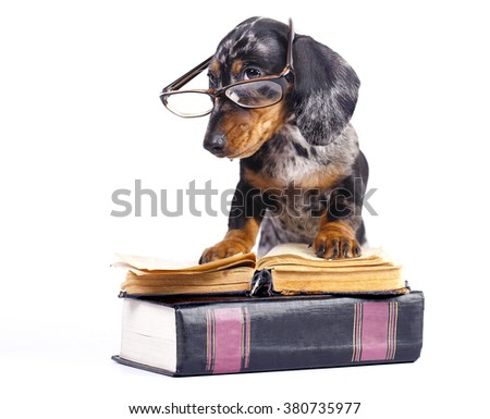 dachshund puppy in glasses and book - stock photo