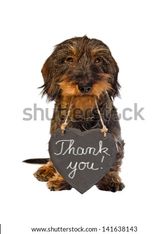 Dachshund with slate heart, Thank you! - stock photo