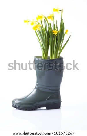 daffodil flowers in garden boot - stock photo