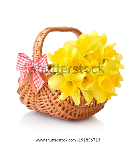 Daffodils in wicker basket isolated on white background - stock photo
