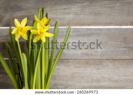 Daffodils on wooden background, copy space - stock photo