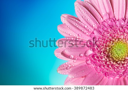 Dahlia fall design.With copy space .Floral background with blue flowers Campanula. - stock photo