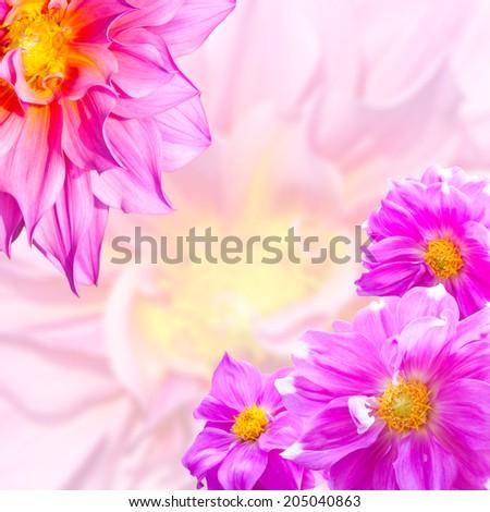 Dahlias isolated Flowers Magic background   - stock photo