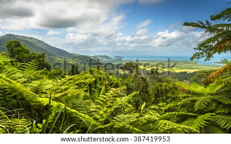 Daintree Rainforest tropical great barrier reef  - stock photo