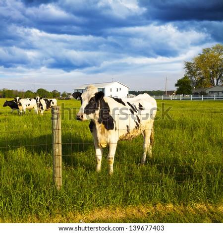 Dairy Farm With Stormy Weather - stock photo