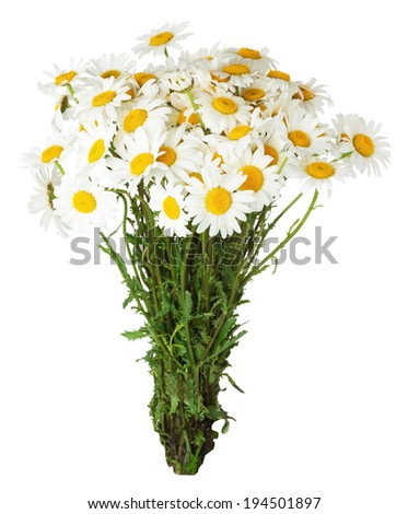 daisy bouquet on the white background - stock photo