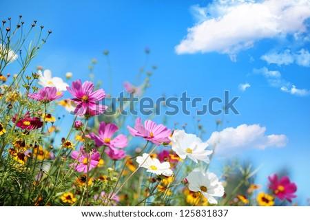 Daisy flower against blue sky - stock photo