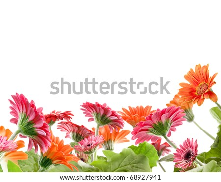 Daisy flowers frame on white background - stock photo