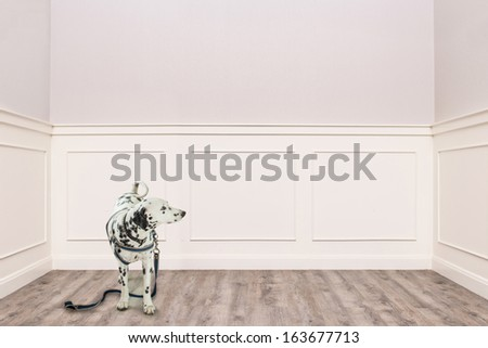 dalmatian looking to empty space in cozy room - stock photo