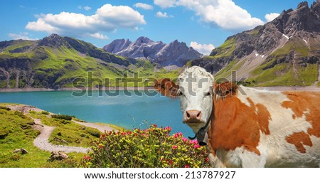dam lake luner see and cow, vorarlberg, idyllic austrian landscape - stock photo