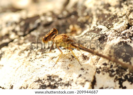 Damselfly Lighting on the Bluff at Castlewood State Park, Missouri - stock photo
