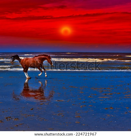 Dancing Horse on the North Sea Coast in Netherlands, Sunset - stock photo