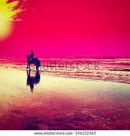 Dancing Horse on the North Sea Coast in Netherlands, Sunset, Retro Effect - stock photo