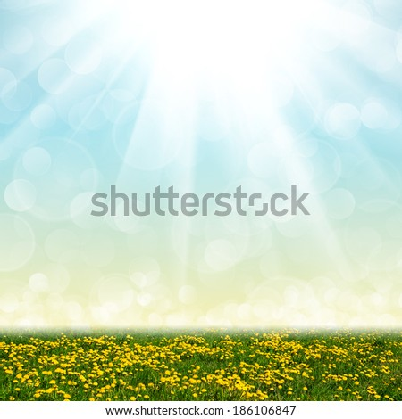 Dandelion field and abstract bokeh lights background - stock photo