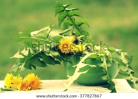 dandelion flower and edible leaves - stock photo
