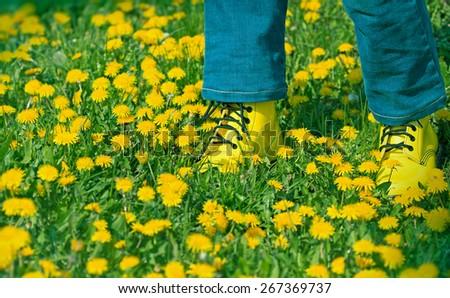 Dandelion flowers in meadow - in spring,  legs with yellow shoes in dandelion field - stock photo