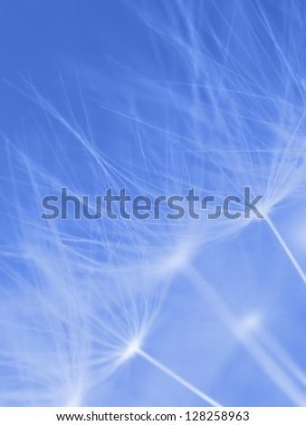 Dandelion fluffs. - stock photo