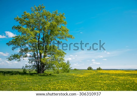 dandelion in green grass. Beautiful spring panoramatic shot with a dandelion meadow. Field of dandelions on background of the sky.  - stock photo