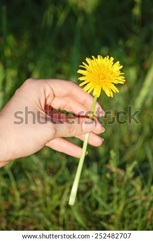 Dandelion in human hand against green nature background - stock photo