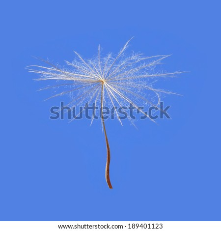 Dandelion seed on a blue sky background.Close up - stock photo