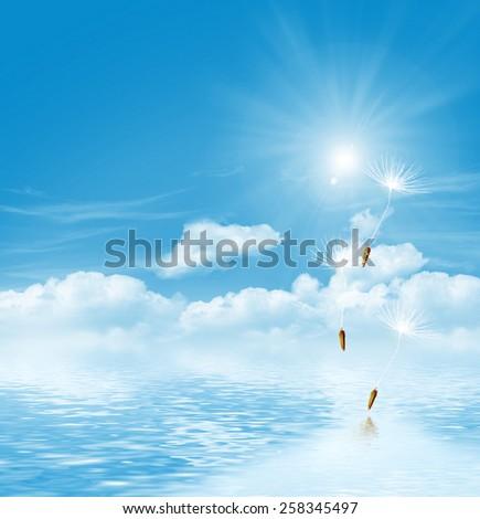 dandelion seeds on a blue sky - stock photo